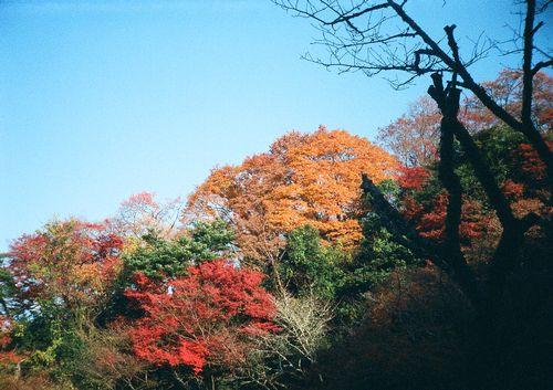148yoshino01.JPG