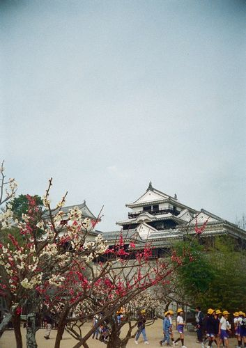 160_matsuyama03.JPG