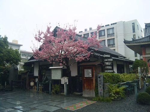 160_matsuyama08.JPG